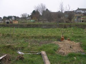 Allotment bed before work
